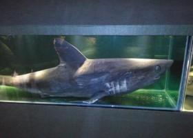 Programa de Visitas no Museu Oceanográfico